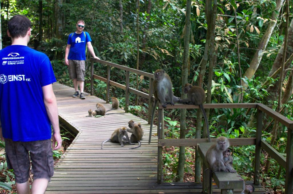 Monkeys all around. Don't feed them ... they get aggressive