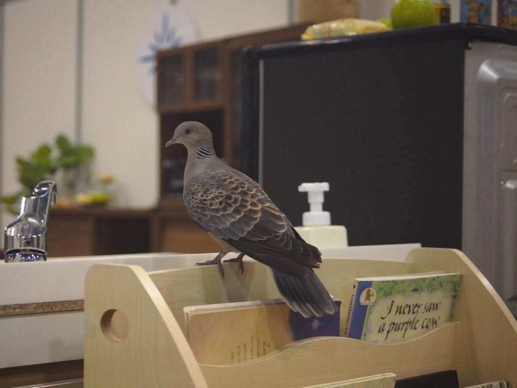 Not just we felt at home in the arena: this pigeon was with us for two days, enjoying the competitions from the best spots
