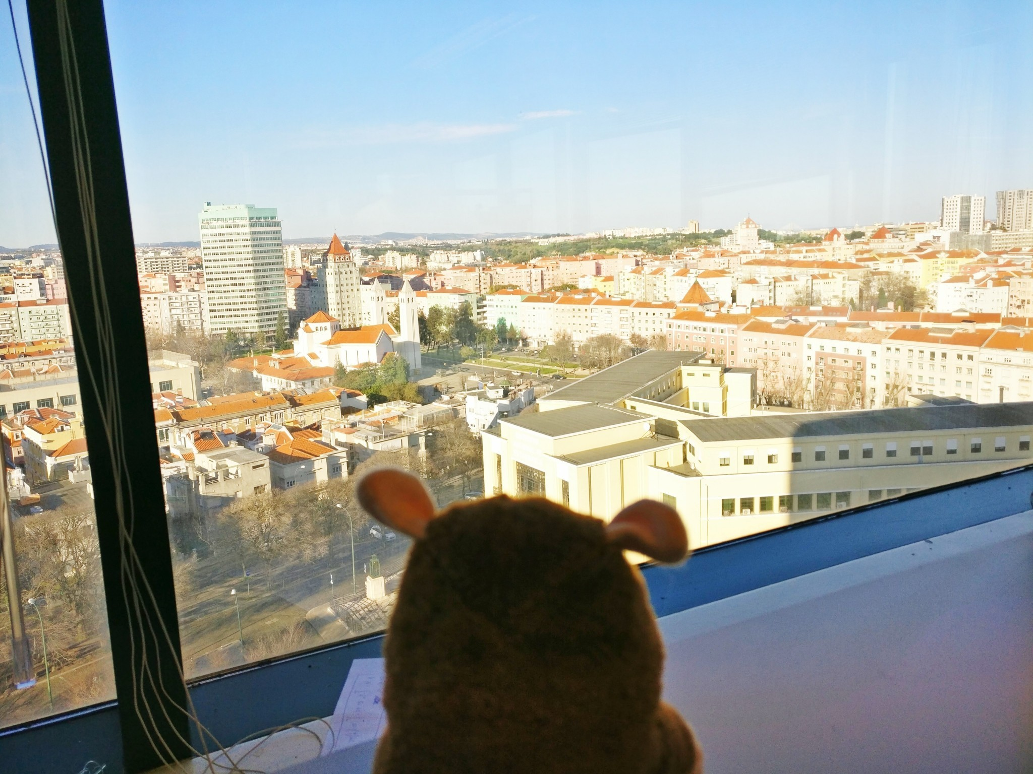 Hamster is enyoing its view out of the window of the Instituto Superior Técnico in Lisbon.